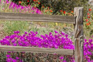 landscape fence