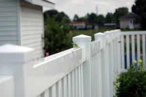 paint your vinyl fence